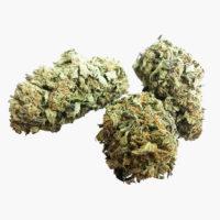Fleurs CBD Chocolope | The Hemp Corner