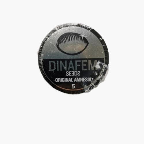 Original Amnesia Féminisée | Dinafem Seeds